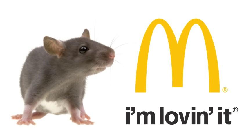 Mulher acidentada ao fugir de rato no McDonalds receber indenizao de R 40 mil